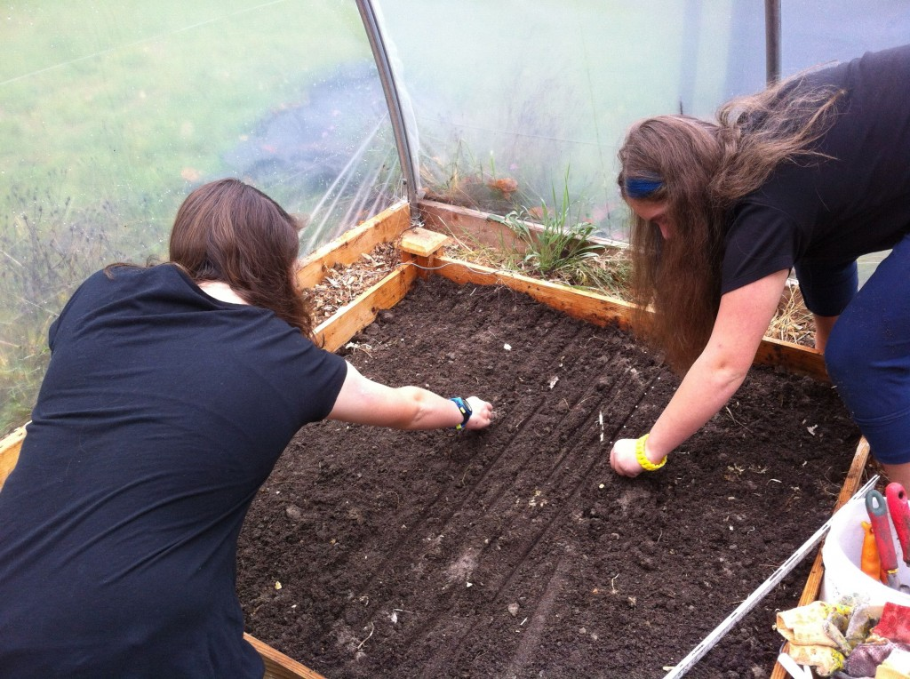 Planting the bed with lettuces