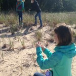Dune grass seed collection